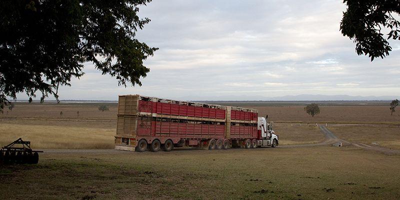 Shaws Livestock